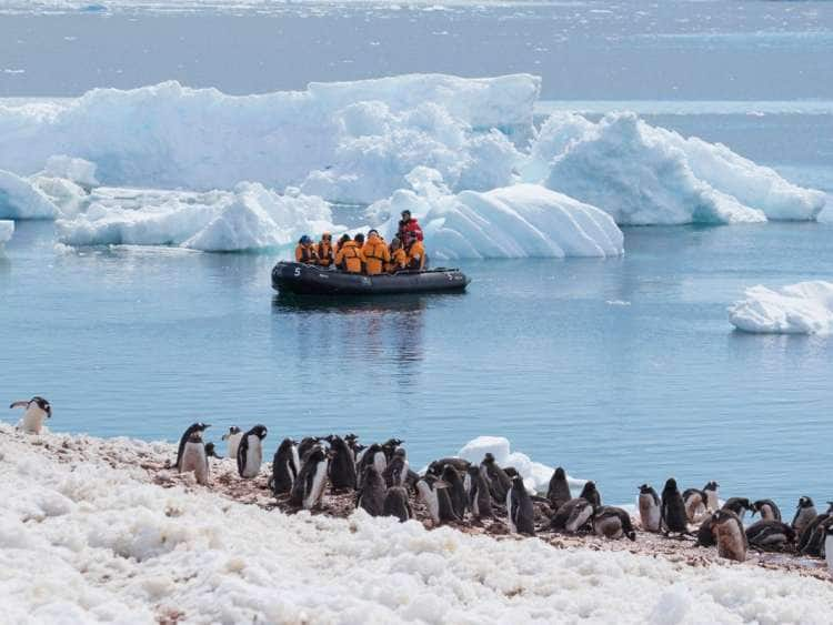 Seabourn guests on raft approaching some penguins while on their Antarctica expedition cruise