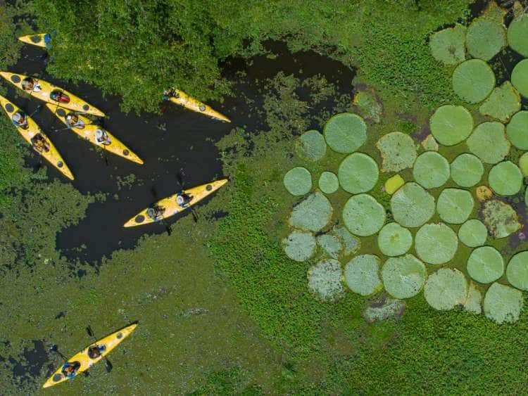 Aerial view of Seabourn guests kayaking while on their Amazon expedition cruise