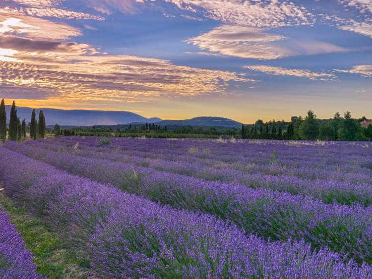 Lavender field and clouds near the town of Gordes, Vaucluse, Provence, France