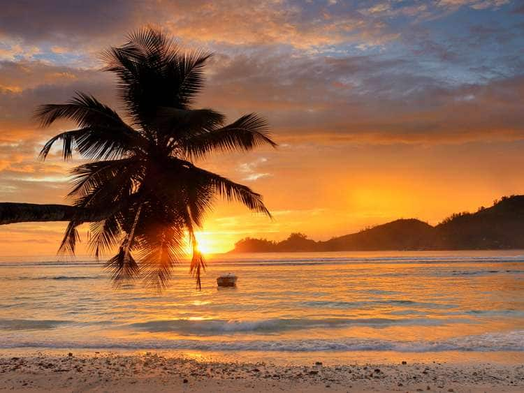 Seychelles, Mahe island, West Coast, Palm Tree on the Beach of Baie Lazare