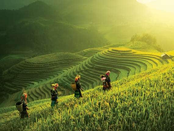 Farmers walking on rice fields terraced of Mu Cang Chai, YenBai, Vietnam
